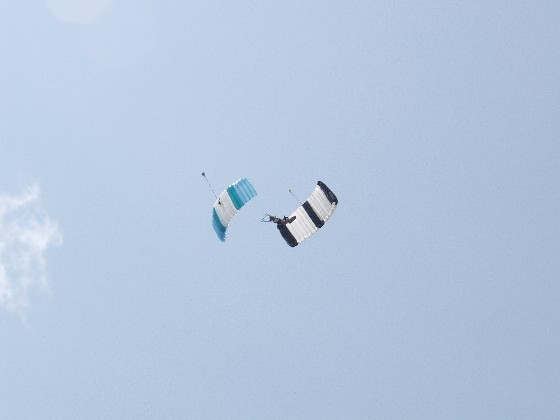 SunnyDee's Downplane.jpg