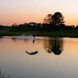 Pond Swoop