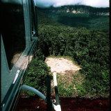 junglelanding