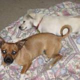 DZ dogs in Hollister