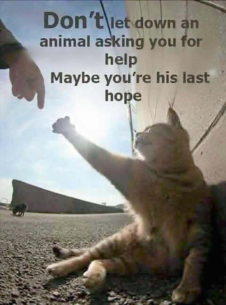 helpMetheCat.jpg.010704f1736afeb907a523324e35264c.jpg