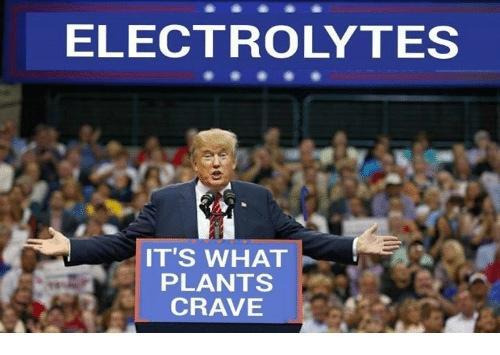 electrolytes.jpg