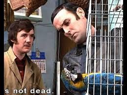 dead parrot.jpg